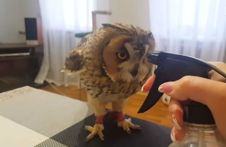owl is ready for bath, but his reaction will crack you up | icepop