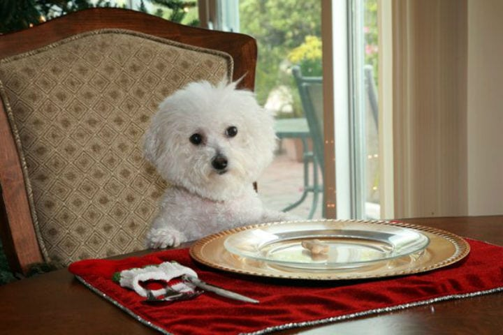 Images Of Pampered Dogs Prove We Don T Live Our Best Lives